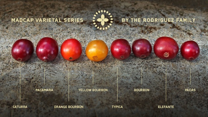 Anatomy of a Coffee Bean – Red Berry Coffee